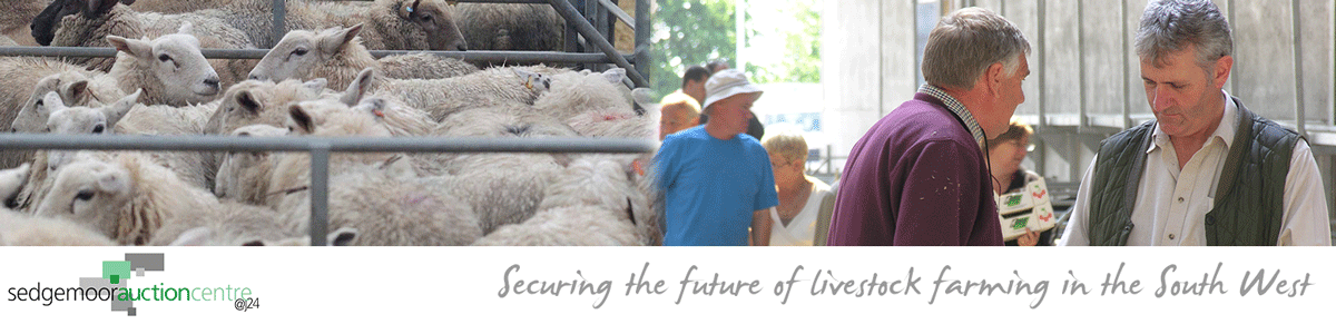 Junction 24 Somerset livestock